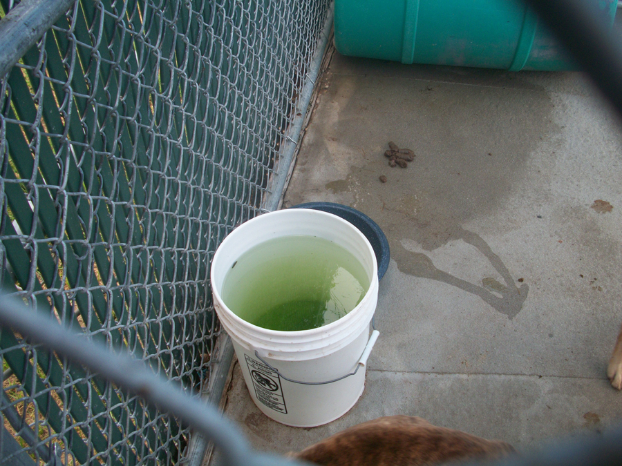 This is a shot of the water the dogs have to drink. Adoption friendly hours?