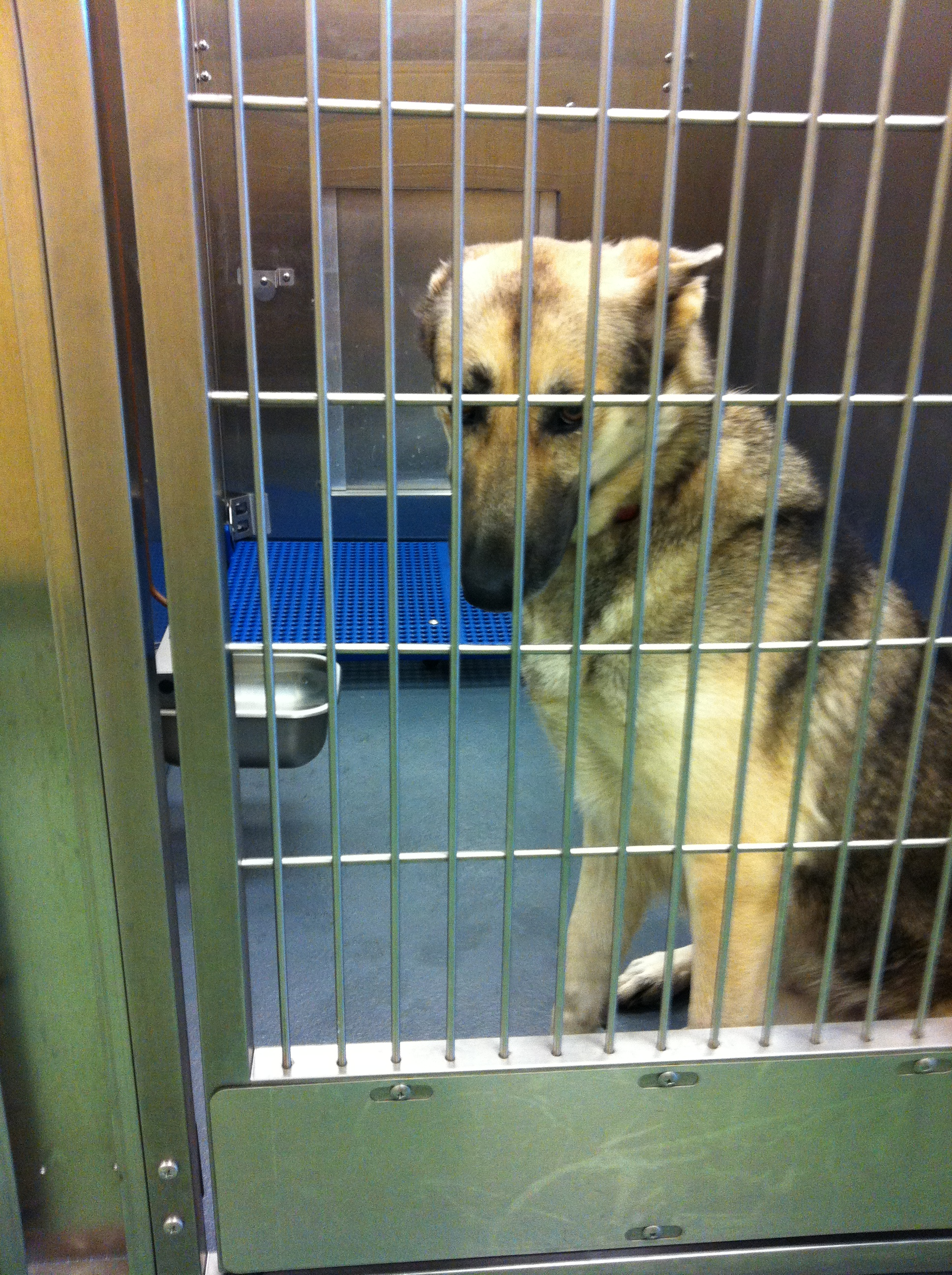Sweet German Shepherd Dog Killed at MAS