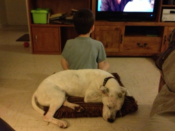 """Submitted by TN Death Row Dogs:  """"Amber at home in Ft. Campbell, KY"""""""