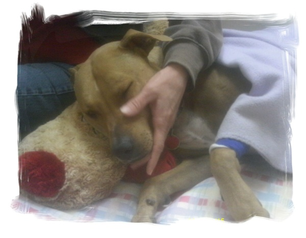 "Submitted by Dot:  ""My friend Cheri comforting ""Celie"" at the vets right after knee surgery, Yanceyville, NC"""