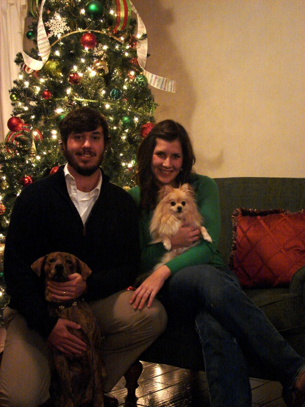 "Submitted by Jamie: ""One last photo for you - the ""family"" photo we used for our Christmas card this year.  The brindle boy is Gonzo - the one we found in the culvert two months ago.  He's about 6 months old.  The other is Lollie, our first child.  She's two.  Happy Holidays to you and your family, Shirley!  Thanks for all you do!"""