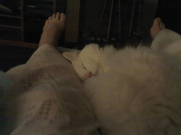 "Submitted by Michele:  ""This is my cat Gordy sleeping in my lap. Gordy is deaf so he sleeps very soundly."""