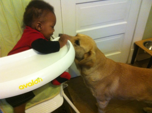 "Submitted by Claire:  ""My grandson, Julian, and my sorta-lab, Swoopes. Swoopes was rescued from MAS in August of 2002."""