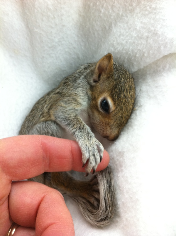 "Submitted by Luanne:  ""Little Buttercup was a sweet little rehab squirrel who was released back to where she belongs."""