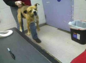 Photo posted on PetHarbor by the Kurth Memorial Animal Shelter in TX.