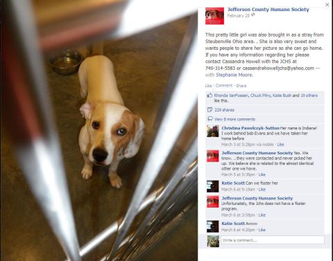Allegations Of Abuse Against Jefferson Co Humane Society In Oh Yesbiscuit