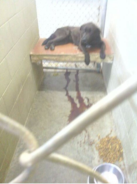 Screengrab taken from a blog allegedly depicting a sick dog at the Lawrence Co pound in Ohio.
