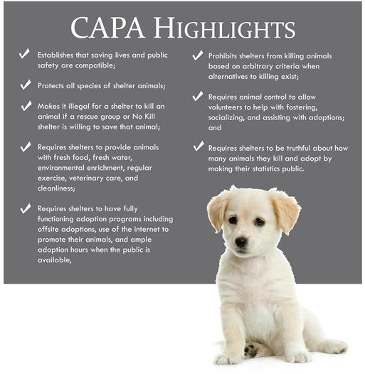 CAPA 4_0001
