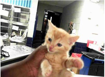 Kitten at the Charlotte pound, as shown on PetHarbor.  The respect.  It's profound.