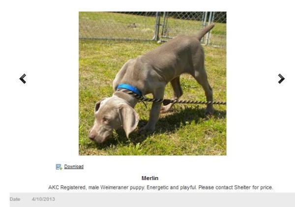 screengrab second chance weim
