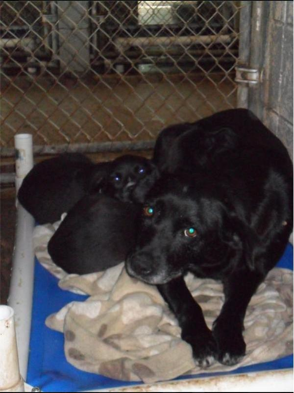 Mama dog and 2 pups at the Vance Co pound in NC, as pictured on Facebook.com.
