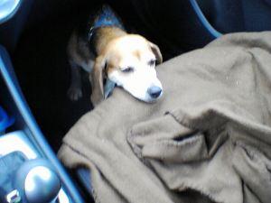 wendy car seat 062013