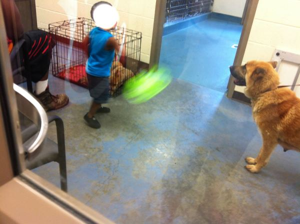 A mama dog and her 3 crated pups as seen through the glass on the door to the owner surrender room at the Memphis pound on June 29, 2013.  (photo by Jody Fisher)