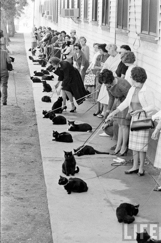 Black cats answer a Hollywood casting call.  [More]