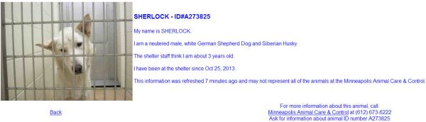 Screengrab of a dog listed as adoptable on the MACC website.