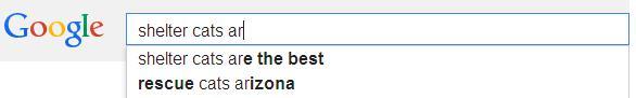 google search5