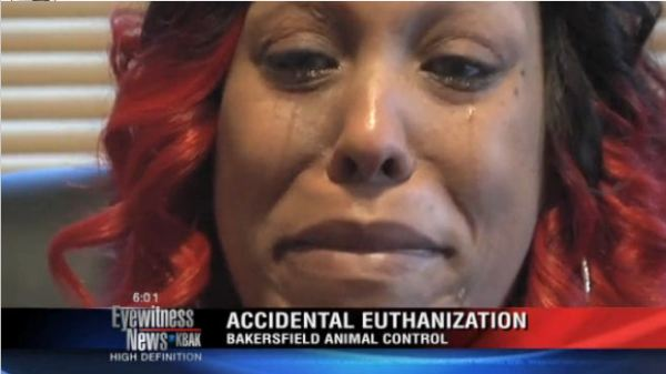 Screengrab from a KBAK newscast depicting Captcho's owner discussing his killing at the Bakersfield pound.
