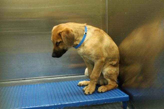 Puppy ID # 269057 at the Memphis pound.