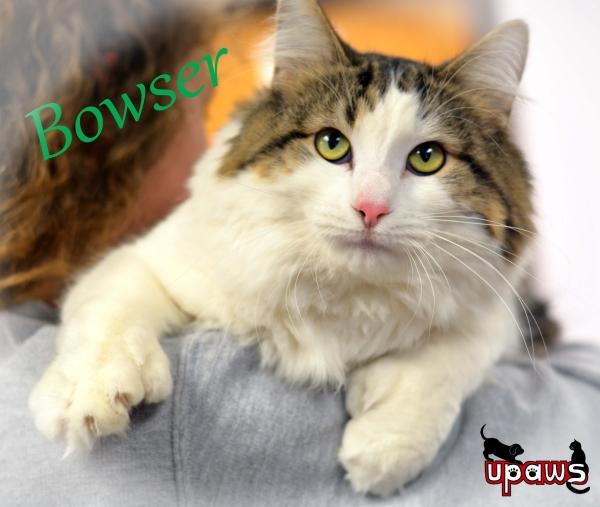bowser6