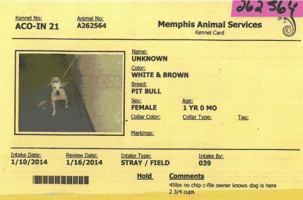 MAS cage card 262564