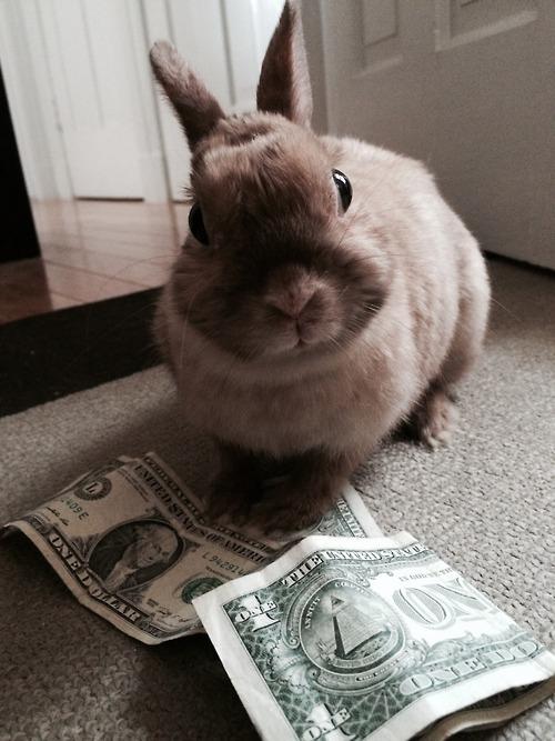 Mo bunny, mo problems [x]