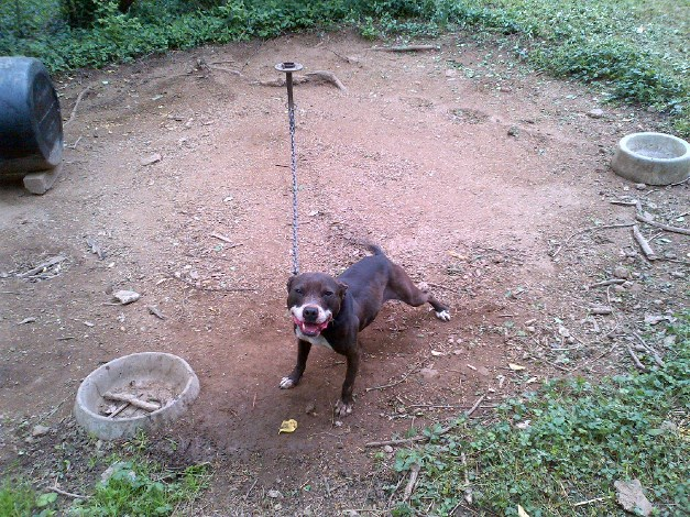 This waggy dog, shown on the Nashville.gov website, appears to be in decent shape, unlike some of the other dogs seized by law enforcement in the raid.