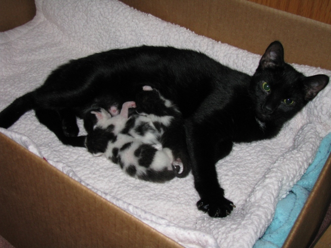 Mama cat and newborn kittens, saved by a member of the public.  Because kittens.  (photo by Casey post)