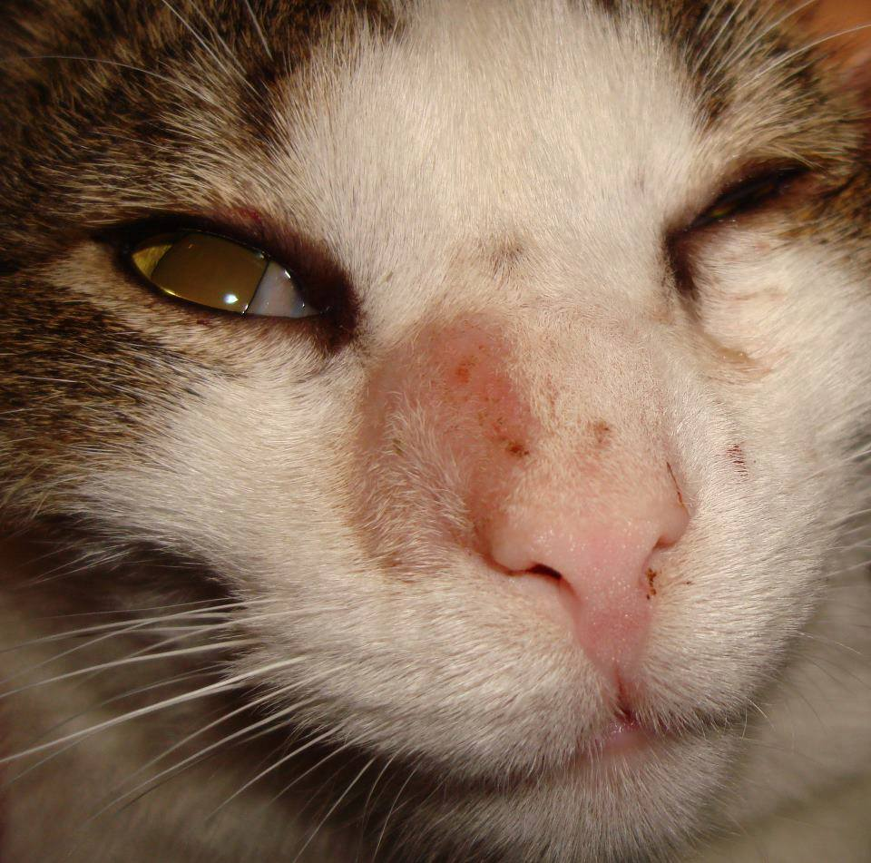 кошки с лишаем фото