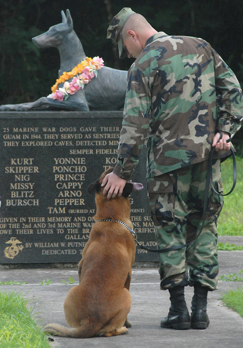 The Always Faithful memorial is the World War II War Dog Memorial located in Guam dedicated July 21, 1994