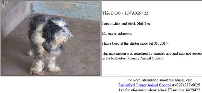 A toy dog on concrete at the Rutherd Co pound in NC  [Screengrab from PetHarbor]