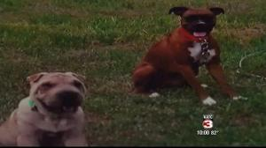 Vick and Fancy, as depicted on the KATC website.
