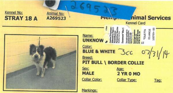 Portion of the cage card for dog ID #269523 at the Memphis pound.