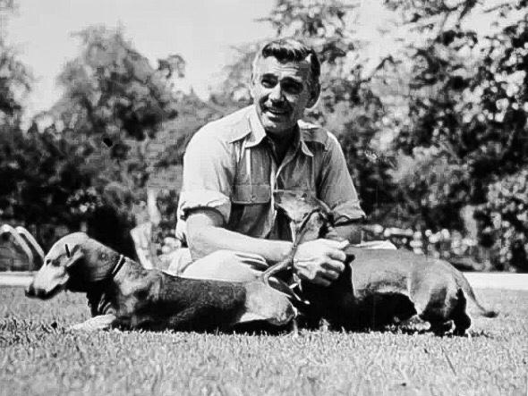 clark gable and dachshunds