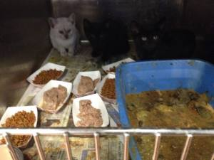 Photo posted on Facebook, described as living and dead kittens in the Helmetta pound's isolation room.