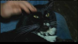 Sylvester, as depicted on the WIS-TV website.