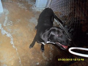 A dog at the Steelville pound in a photo from 2013 on Facebook.