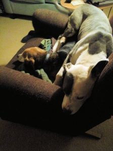Sometimes little beagles take up so much space.