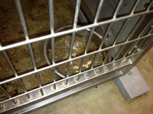 Photo documenting filthy conditions at the Klein Animal Shelter (Photo posted on the KE website.)