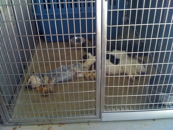 2-11-11 Dead Puppies left in cage