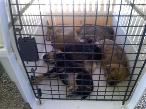 2-11-11 dead puppies put down in one crate