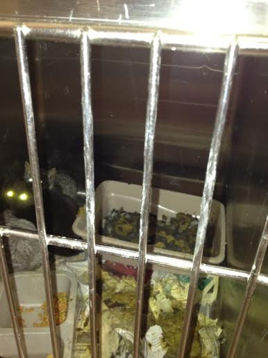 Cats in a filthy cage at the Klein Animal Shelter.