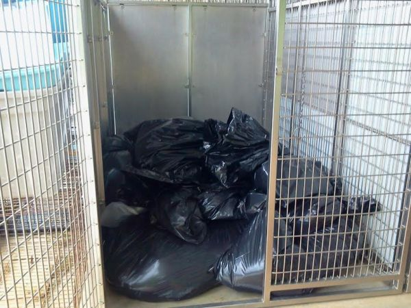 Pile of dead animals in trash bags in a dog run.