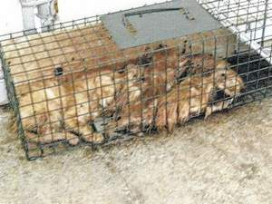 Six cats in a trap on the floor of the Van Wert Co Humane Society,
