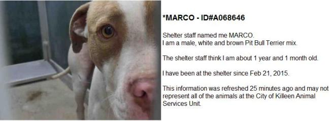 Screengrab from the city of Killeen's website showing a dog at the pound.