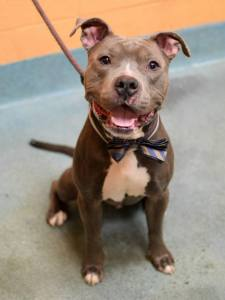 Sarge, ID #A1028331, on the kill list for today in Brooklyn, as posted on Facebook.
