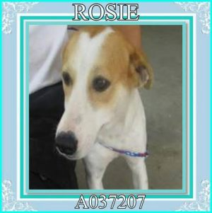Rosie, as pictured on Facebook.