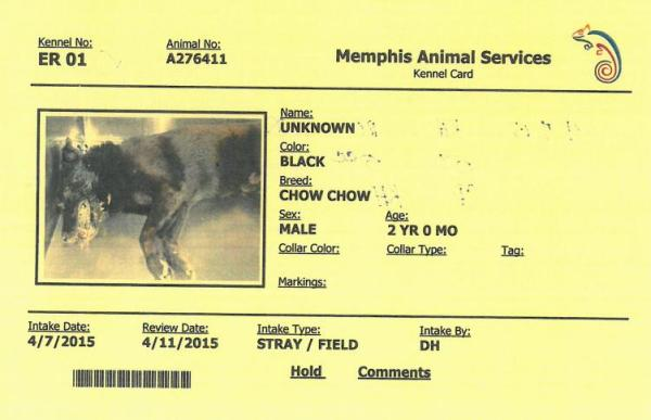Obtained via FOIA request, this is a portion of the Memphis pound records for dog ID #276411.