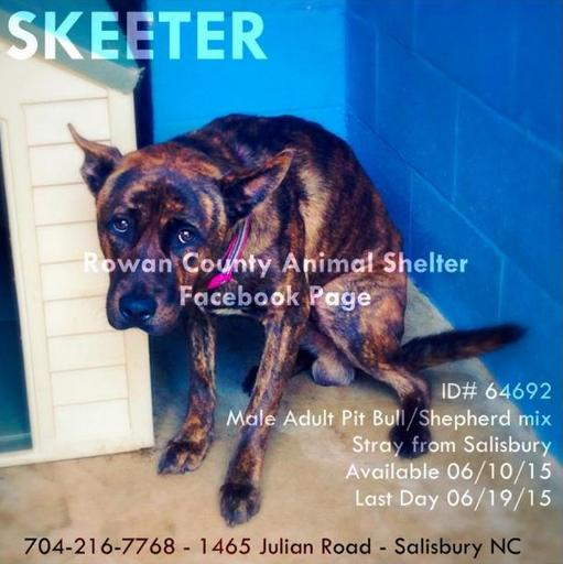 One of the six pets advertised for adoption by the Rowan Co shelter in NC.  (Image via Petfinder)