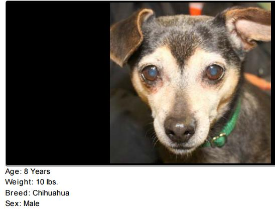 Nala, a dog listed for adoption by the Northeast Animal Shelter in MA, is one of the dogs whose listings were screencapped for the NAIA study.