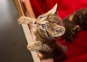 Kitten #35611, identified by animal advocates on Facebook as one of the cats killed by a dog at the Columbus Co pound.